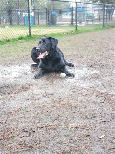 Albi at the Paws Park