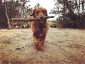 penny at dog park
