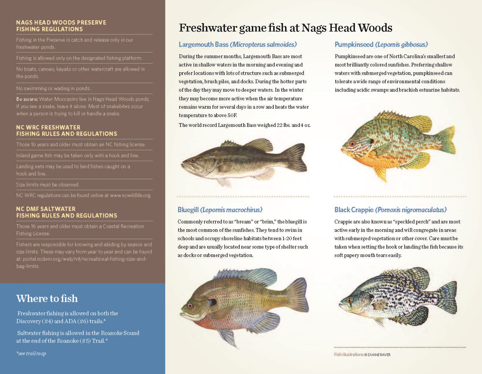 nhw-fishing_Page_2